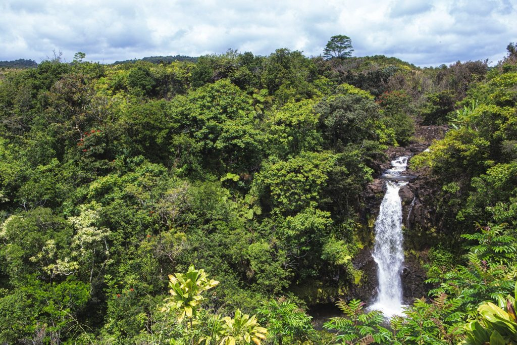 botanical world adventures wedding venue waterfall location