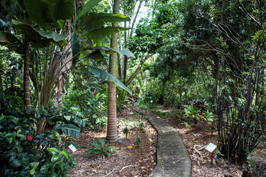 botanical world adventures wedding venue garden path
