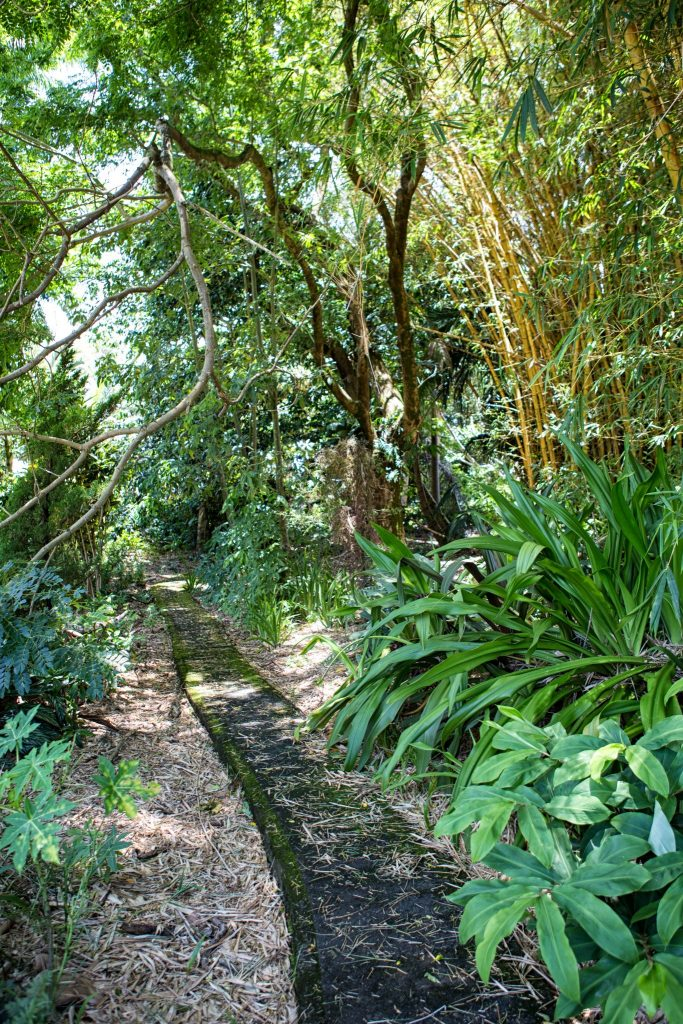 botanical world adventures wedding venue garden path with trees and flowers