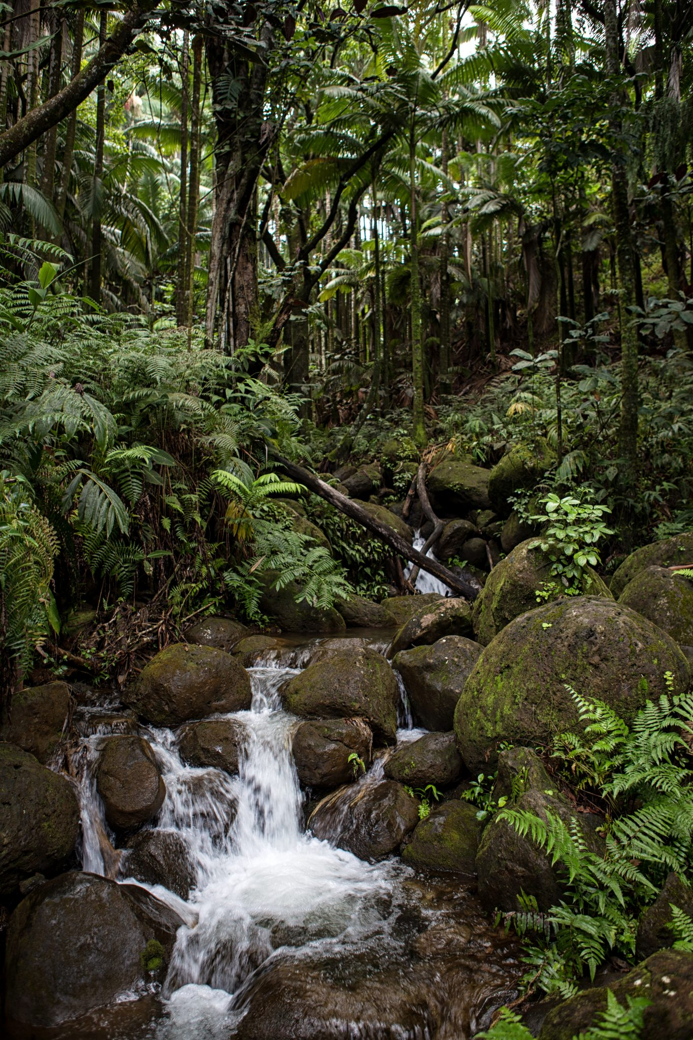 Hawaii Tropical Botanical Garden – Location | Hilo Hawaii Big Island ...