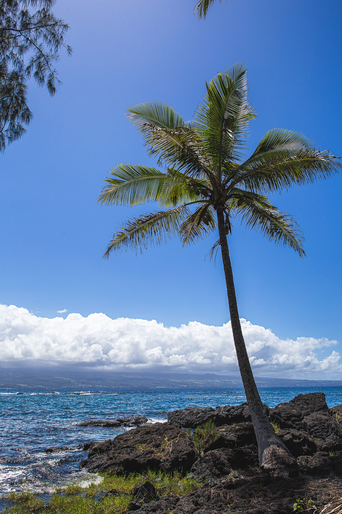richardson ocean park palm tree big island hawaii