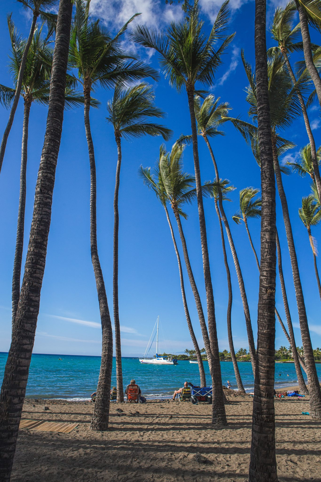 A Bay Beach palm trees and ocean big island hawaii